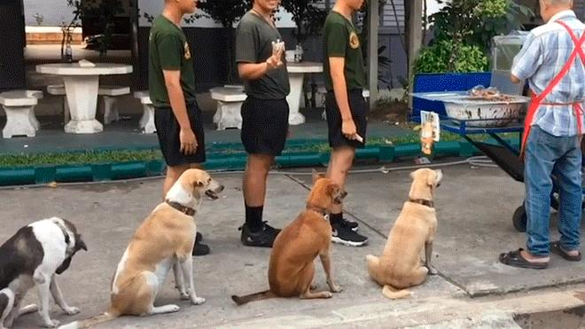 Video viral - perros